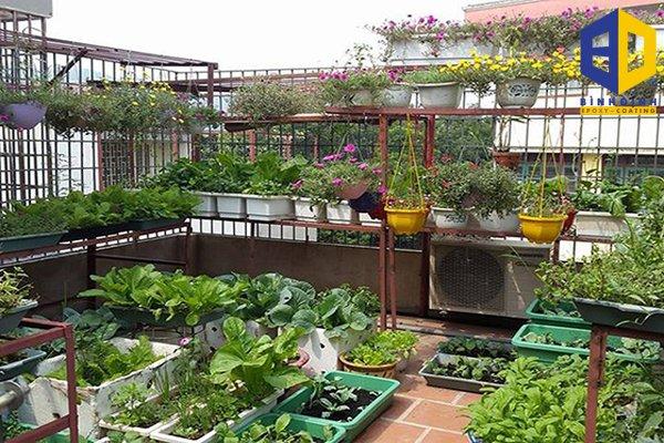 phương pháp chống thấm sân trồng cây